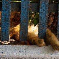 Не будите спящего кота - сиеста :: Александр Неустроев