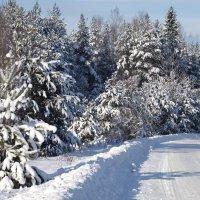 Дорога зимой. :: Андрей Зайцев