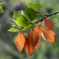Лето-Осень... :: Serik Zulkharov