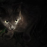 Выхваченная из темноты. :: Николай Бабухин