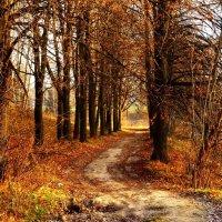 Дорожка в Осень :: Андрей Самуйлов