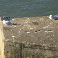 Северное море Whitbe UK :: Ирина Кеннинг