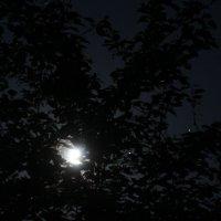 Луна светит сквозь ветви вишни :: Сергей Белолипецкий