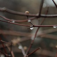 Дождь :: Larisa Gavlovskaya