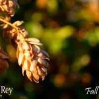 Fall time1 :: Андрей Дрожжин