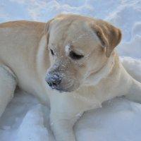 Мой любимый пес :: Юлия Доронина
