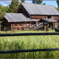 И огород, засеянный овсом. :: Владимир Прынков