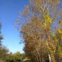 Осенний лес :: Марк Скеллхэм