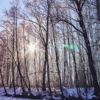 Зима1 :: Ярослав Зинченко