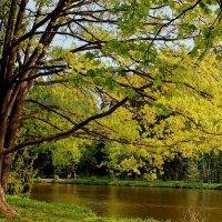 Весна в разгаре :: Наталья Лунева