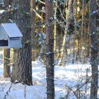 Птичий домик :: levonchik stepanyan