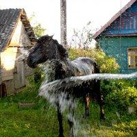 ....и жары как не бывало) :: Андрей Самуйлов