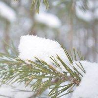 Снег :: Евгений