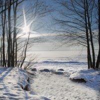 Солнечный зимний день на финском заливе. :: Irina Sergeeva