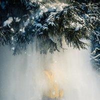 Снежный туман :: Григорий Никитин