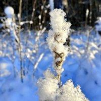 Снежинки на былинке. :: Виталий Половинко