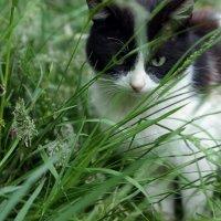 Кузя и трава :: Виолетта