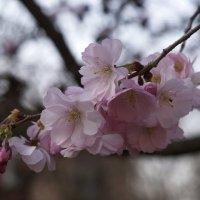 весна :: Анна Ярмоленко