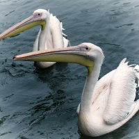 Птички :: Маргарита Лапина