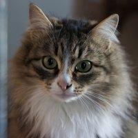 Бабушкина кошка :: Андрей Бакунин