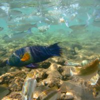Рыба :: Михаил Карпов