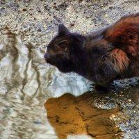 апрельский кот, водопой. :: Михаил Николаев
