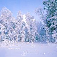 Зимний лес. :: Алексей Хаустов