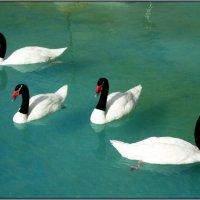 лебединое озеро :: Svetlana Plasentsiia