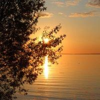 Луч солнца золотой. :: Инна Пономарева