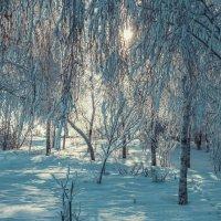Морозильная красота :: Анастасия Вадова