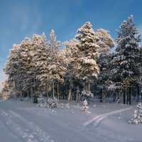 Зима. Таежный ясный день... :: Татьяна .