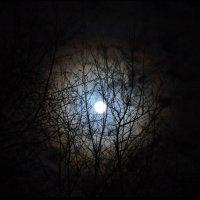 Лунная ночь :: Анастасия Сусманова