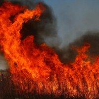 Стихия пламени. :: Толя Толубеев