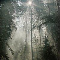 ..в лесу.. :: Галина Юняева