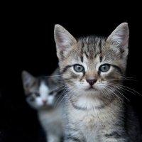 Серьёзный кот :: Игорь Воронков