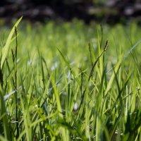 Просто трава :: Денис Ахрамеев