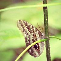из серии бабочек :: Natalya секрет