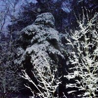 Зима. Лес Кузьминский. Вечер. :: Ольга Кривых