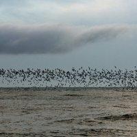 Чайки и море :: Виолетта
