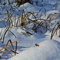 Травка зимой :: Виктория
