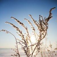 мороз у реки :: Наталья Андреевна