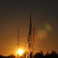 закат :: Galina G