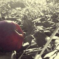Осень :: Andrey Dikiy