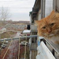 осторожное любопытство Босса.фото В Лукина :: галина лаврова