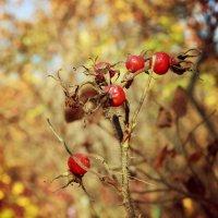 осень :: Виктория Сорока