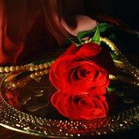 страстная роза :: Татьяна Киселева