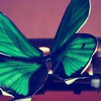 Lepidoptera :: Юля