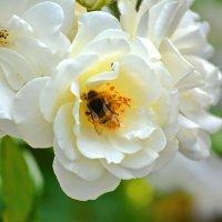 Цветы. :: Геннадий Александрович