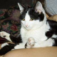 Смешной мой котька) :: Оля Кравченко
