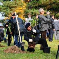 дерево в память о боевых друзьях :: Андрей Куприянов